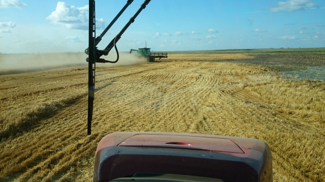 First crop to be combined: winter wheat.