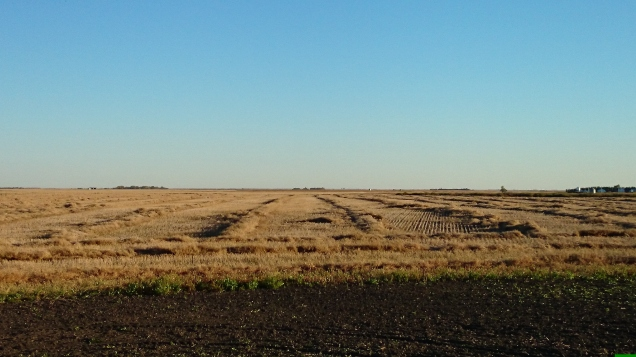 Take a close look at these swaths. The wind moved them around pretty badly. That costs a lot of canola.