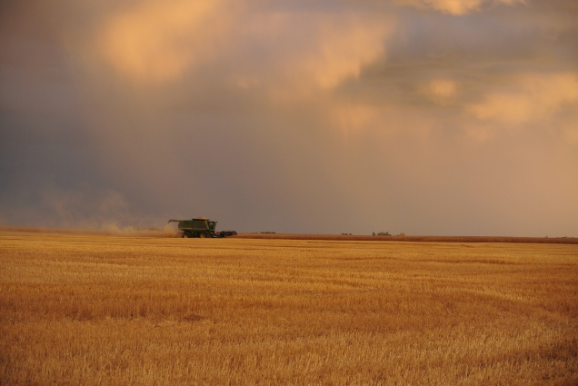 Leguee Wheat Harvest