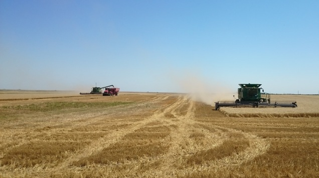 The first crop in the bin - winter wheat.