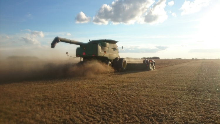 Lentils- not the easiest crop to get off the ground, but a very rewarding one.