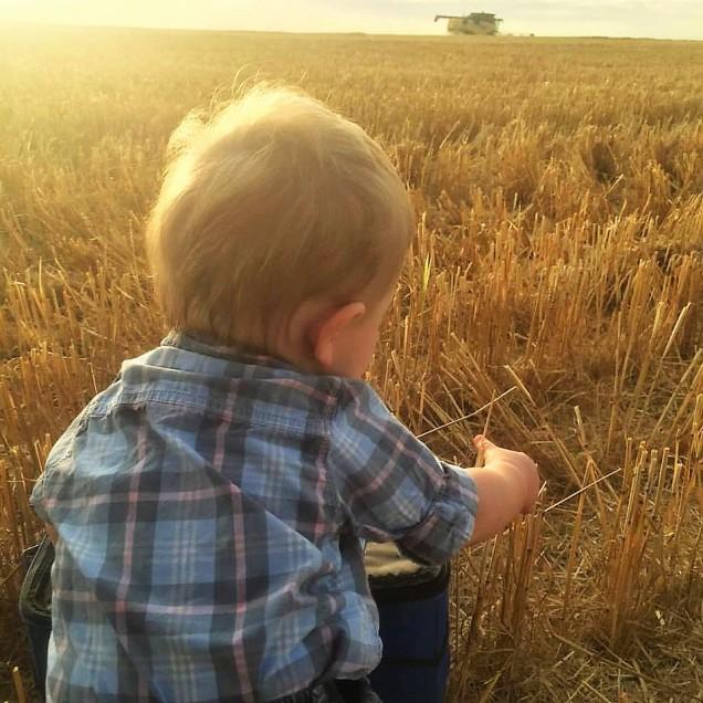 Asher harvest